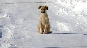 Stray dog on a snow Stock Photo