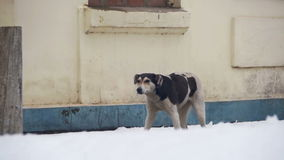 Stray Dog on a Snowy Street in Winter. Slow Motion stock footage