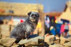 Stray dog on stone fence Royalty Free Stock Image