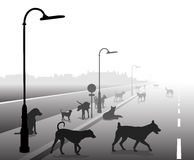 Stray dog street. Editable vector illustration of a motley group of stray dogs on a lonely road Royalty Free Stock Image