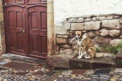 Stray dog on street stock photo