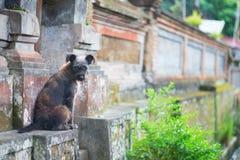 Stray dog on a street of Ubud, Bali Royalty Free Stock Images
