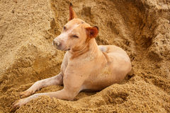 Stray dog. Stock Image