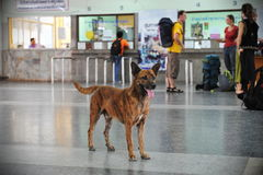 Stray Dog. In a Train Station in Thailand Stock Photo