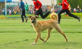 Stray dog try to play football Stock Photos