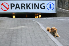 Stray Dog and Underground Parking Stock Photography