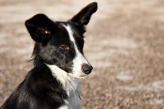 Stray Dog Winking. Funny stray dog portrait in morning light Stock Images