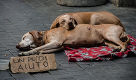 Stray dogs of a beggar lying on a mat in a street