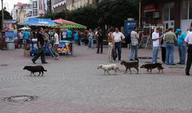 Stray dogs Royalty Free Stock Photo