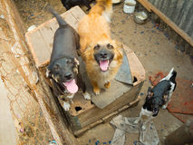 Stray dogs. In the shelter Stock Photography