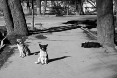 Stray dogs bask in the sun outside at winter. stock image