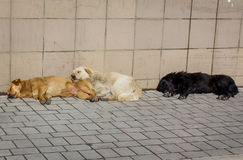 Stray dogs bask in the sun. Uktaine, Donetsk Stock Images