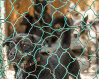 Stray dogs behind fenced enclosure Stock Photography