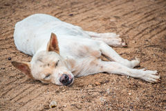 Stray dogs. Stray dog is sleeping on the non-asphalt road Royalty Free Stock Image