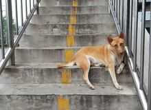 Stray dogs. Female  brown-haired.Dogs living on a flyover. Homeless dogs .Positive stray Royalty Free Stock Photos