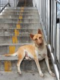 Stray dogs. Female  brown-haired.Dogs living on a flyover. Homeless dogs .Positive stray Stock Photo