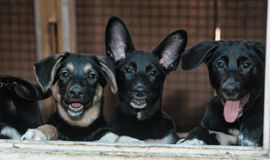 Stray Dogs In The Shelter Royalty Free Stock Images