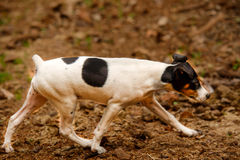 Stray dogs of the island of La Palma Royalty Free Stock Photography