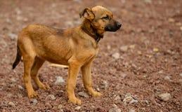 Stray dogs of the island of La Palma Royalty Free Stock Photos