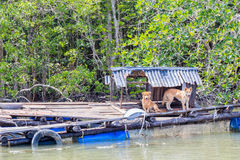 Stray dogs occupying abandoned raft Royalty Free Stock Photography