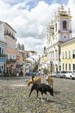 Stray Dogs in Pelourinho Salvador Brazil. Stray dogs gather in cobblestone plaza in front of colorful colonial architecture in the historic city center of royalty free stock photography