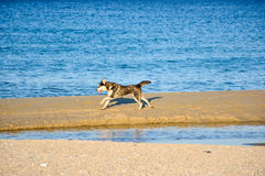 Stray Dogs Royalty Free Stock Photos