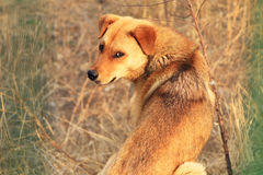 Stray dogs. A poor stray dogs in need of help Stock Photos