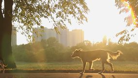 Stray dogs running in city park, beautiful nature in urban landscape background. Stock footage stock video