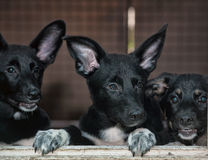 Stray dogs in the shelter Royalty Free Stock Image