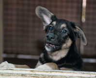 Stray dogs in the shelter Stock Photography