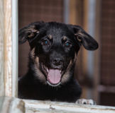 Stray dogs in the shelter Royalty Free Stock Photos