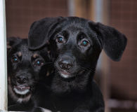 Stray dogs in the shelter Stock Image