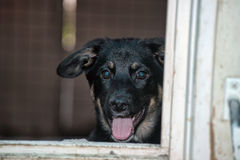 Stray dogs in the shelter Stock Photos