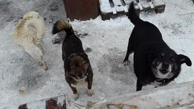 Stray dogs in the shelter in Ukraine stock video