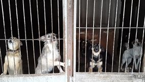 Stray dogs in the shelter in Ukraine stock video footage