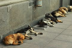 Stray dogs sleeping on a sidewalk Royalty Free Stock Images
