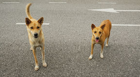 Stray dogs on street Stock Photo