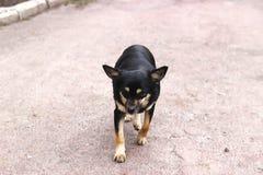 Stray dogs on street sad look Stock Photo