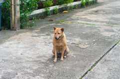 Stray dogs on the street, sitting languidly. Stock Photography