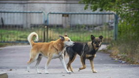 Stray Dogs on the Street. Slow Motion stock video footage