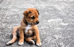 Stray dogs in Thailand puppy pet stock photography