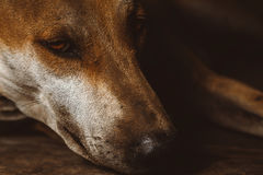 Stray dogs. Are very sad royalty free stock photos