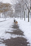 Stray dogs walking in the snow Royalty Free Stock Photography