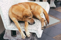 Stray dogs in Wat Phrathat temple on Doi Suthep, Chiang Mai Stock Image