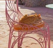 Stray ginger cat Stock Image