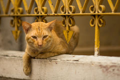 Stray ginger cat lies under the iron fence-lattice. Nature. Stock Images