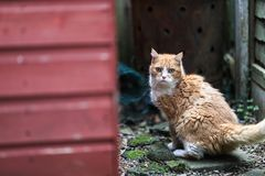 A ginger cat startled down an alleyway on London. royalty free stock photos