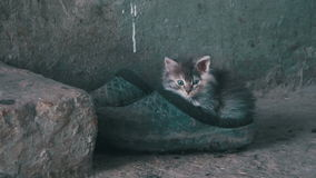 Stray gray fluffy kitten is sitting on shoes in the street. Homeless gray fluffy kitten is sitting on shoes in the street. Summer stock video footage