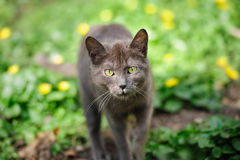 Stray grey kitten Stock Photo