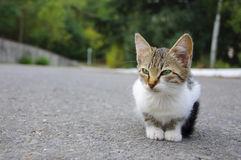 Stray kitten Stock Image